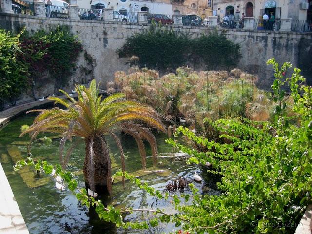 Fuente Aretusa, Ortigia (Sicilia)