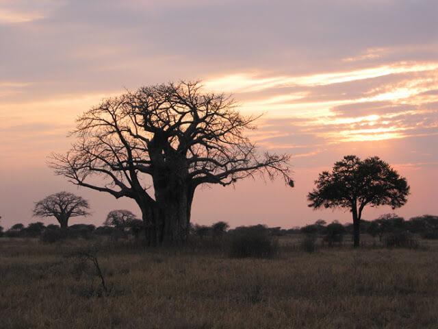 Atardecer africano en Tarangire