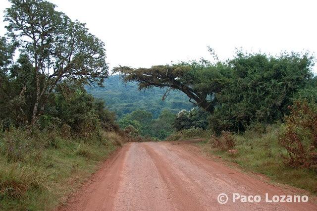Bajada al cráter del Ngorongoro