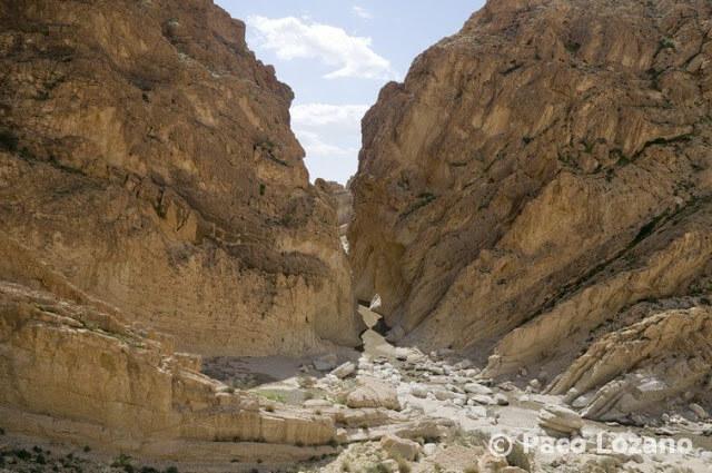 Desfiladero de Selja, Túnez